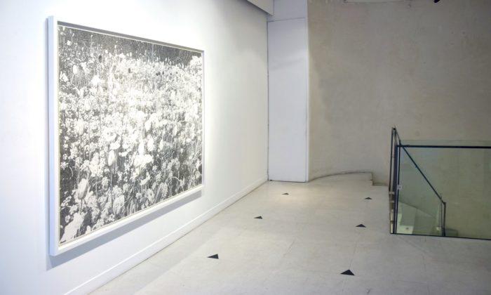 Galerie Rosa Turetsky