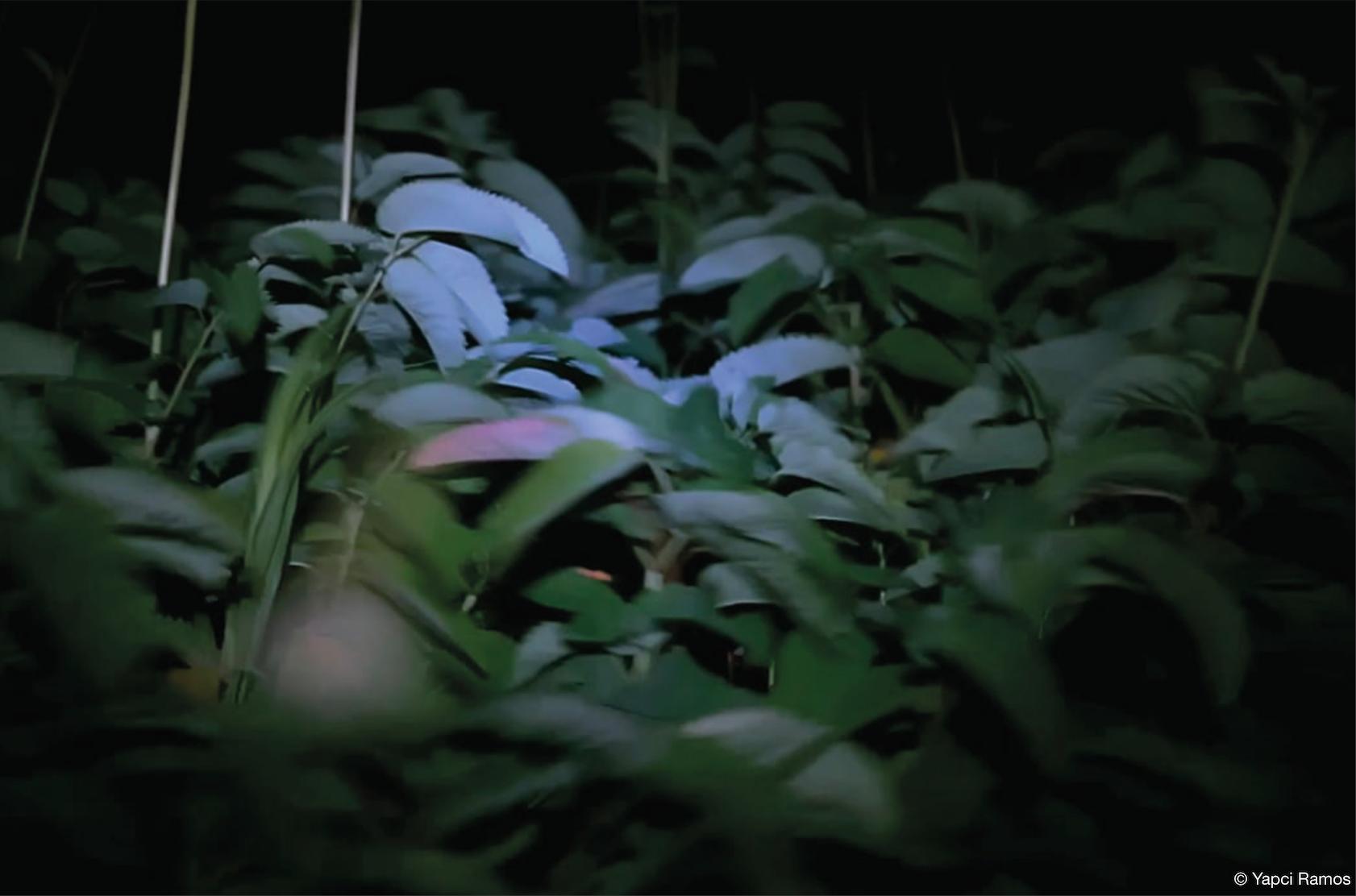 *VIDEO FOREVER 38 «CE MONDE QUE NOUS N'AVONS PAS ENCORE PERDU» DE L'ANTHROPOCÈNE À L'EDEN*
